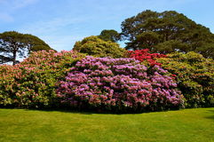 Muckross House in Killarney Royalty Free Stock Photo