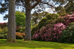 Muckrosshuis in Killarney Royalty-vrije Stock Fotografie