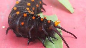 Mucus Caterpillar Stock Photos