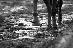 Mud. Horse feet in the mud Stock Photo