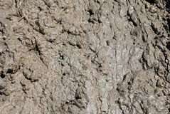 Free Mud Stock Images - 2005634