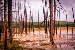 mud Arkivfoton
