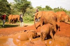 Mud bath Stock Photos