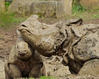 Mud Bath. Mother and Baby take a mud bath in the mid day sun royalty free stock image