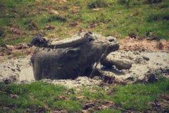 Mud Bathing royalty free stock photos