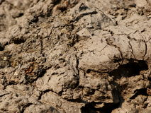 Mud clay broken earth surface texture Royalty Free Stock Photography