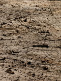 Mud clay broken earth surface texture Royalty Free Stock Photo