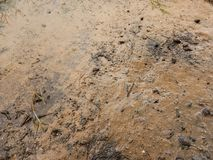 Mud, clay after flooding, wetland. Wetland, dirt become mud or clay after rain and flooding. Ground land soil stock photo