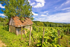 Mud cottage in hill vineyard Royalty Free Stock Images