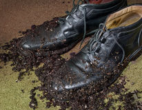 Mud covered men's dress shoes. Pair of black men's dress shoes with mud Stock Photo
