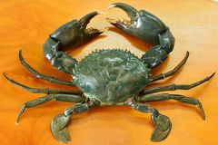 Mud crab Scylla serrata. On table royalty free stock photography