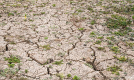 Mud crack and little grass. Mud crack and dispersive little green grass Stock Photography