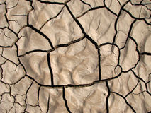 Mud cracks. Shrinkage cracks in dried silty clayey soil Royalty Free Stock Photo