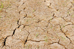 Mud cracks Stock Photography