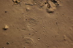 Mud with craters. Brown mud with craters, background royalty free stock photo