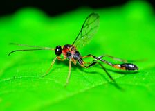 Mud Dauber Wasp Stock Photos