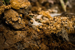 Mud Royalty Free Stock Image