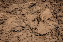 Mud dirt texture. Dry cracked earth. stock photo