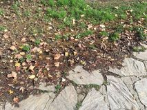 Mud and fallen leaves Royalty Free Stock Photo