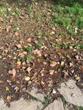 Mud and fallen leaves Stock Photography