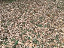 Mud and fallen leaves Stock Image