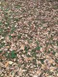 Mud and fallen leaves Royalty Free Stock Photos