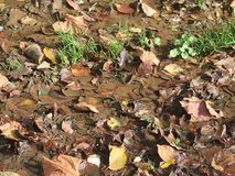 Mud and fallen leaves Royalty Free Stock Images