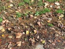 Mud and fallen leaves Royalty Free Stock Photography
