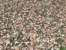 Mud and fallen leaves Stock Photo