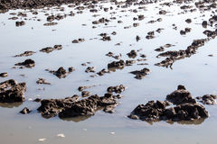 Mud field in water flood Stock Image
