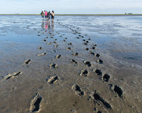 Mud Flat Hiking Royalty Free Stock Photos