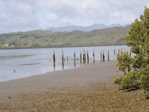 Mud flats. The mud flats at the edge of the water in Hokianga Harbour in New Zealand stock photo