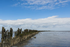 Mud-flats of Waddensea Stock Photography
