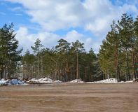 Mud green pine tree forest dirty road with cloudy sky. Background stock image
