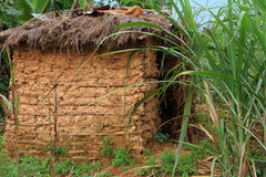 Mud Hut Home. A small mud hut among tropical jungle grasses Stock Photos
