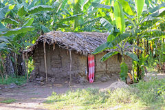 Mud hut in a tropical forest Royalty Free Stock Image