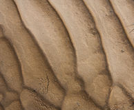 Mud pattern Stock Photography