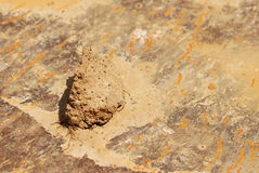 Mud. A piece of dried mud Stock Photography