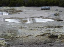 Mud Pool at Lake Rotorua royalty free stock photography