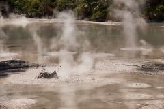 Mud Pool at Wai-O-Tapu Geothermal Area near Rotorua. New Zealand royalty free stock images