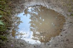 Mud puddle reflecting sky and evergreens Stock Photo