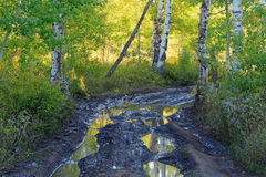 Mud puddles on a dirt road. Mud puddles in an aspen forest, Utah, USA Royalty Free Stock Photos