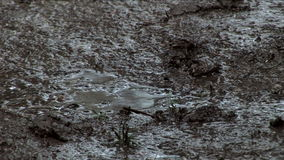 Mud After The Rain stock video footage
