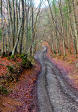 Mud road in autumn forest Stock Images