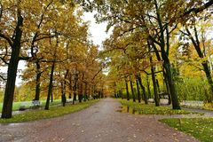 The mud road with fall foliage and yellow trees at Saint Petersburg Part in autumnk stock photo