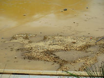 Mud Roadrunner Bird. Dried out mud in storm canal in Malaga looking like Roadrunner Bird stock photos