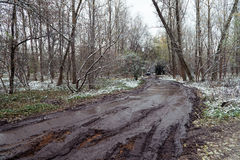 Mud rutted road in forest Royalty Free Stock Photo