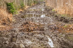 Mud rutted road in the woods Stock Image