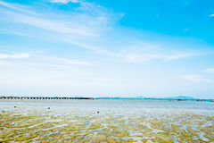 Mud and stone beach. Ebb tide at sea of Kho Loi island in Sriracha Thailand has stone and green mud appear royalty free stock photo