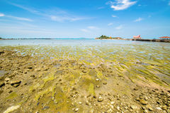 Mud and stone beach. Ebb tide at sea of Kho Loi island in Sriracha Thailand has stone and green mud appear stock image